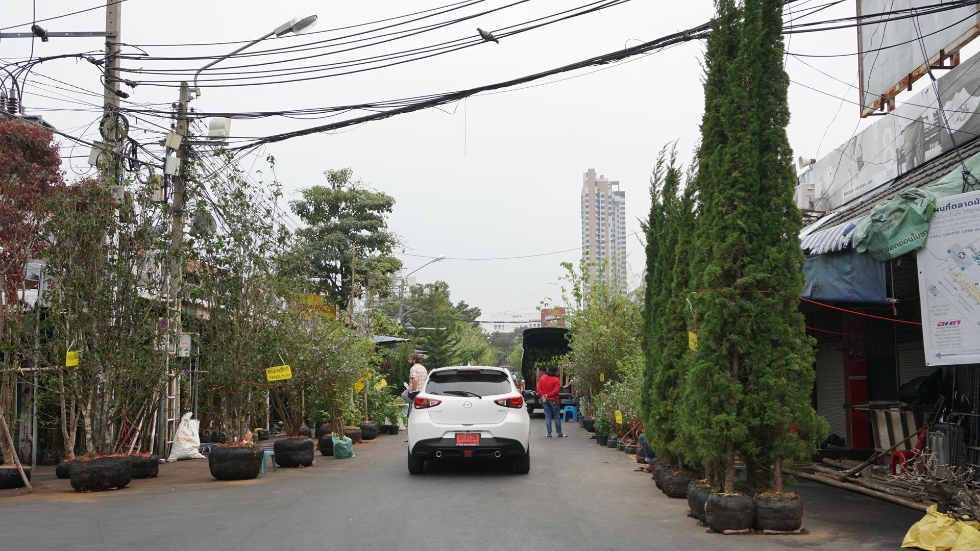 ตลาดต้นไม้จตจุักร